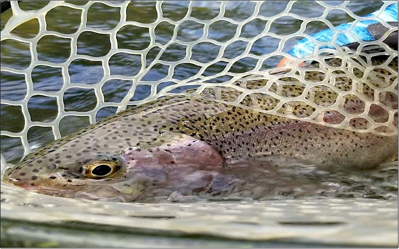 Worley Bugger Fly Co -Fly Fishing Report For Central