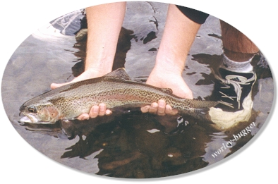 The Release Of The Yakima Bow