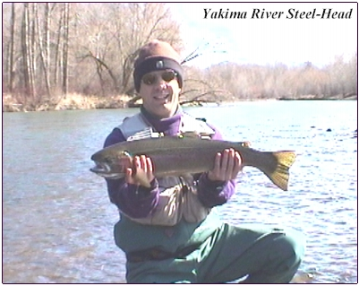A Fish Of A Life-Time On The Yakima!